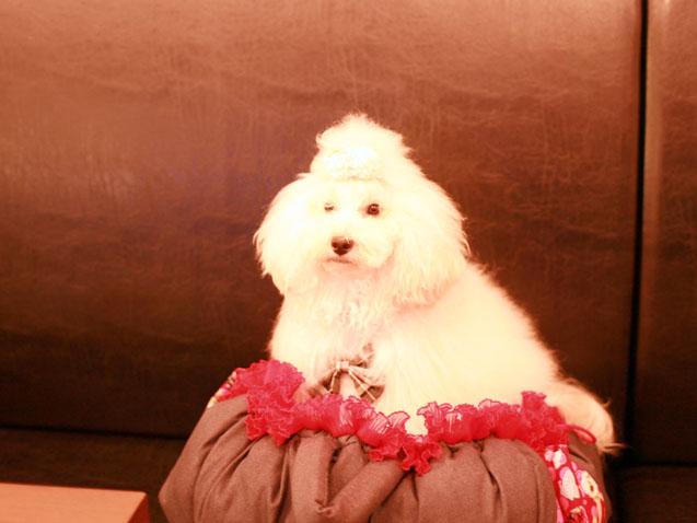 苺姫161009